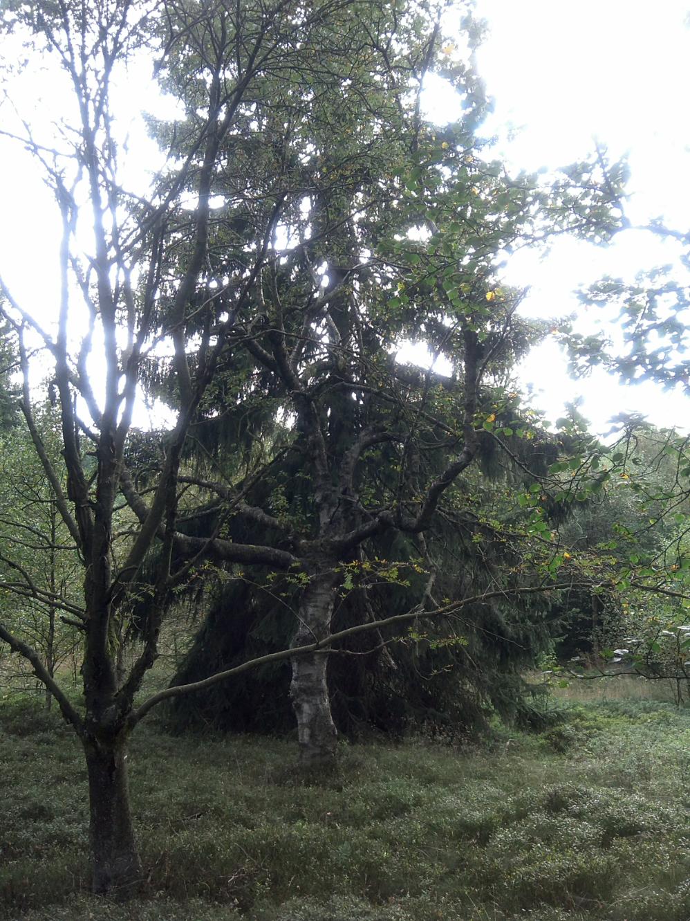 bergwaldprojekt greendelicious