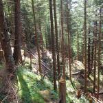 Bearbeitete Stelle im Wald