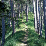 Steiler, aber einladender Weg zur Hütte