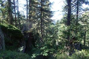 Waldmosaik, oberes Villnösser Tal