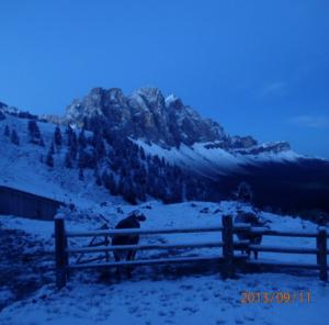 Alle Kühe kamen Wetter bedingt zur Hütte.