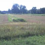 Tauben auf relativ frisch gemähtem Feld.