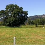 Freistehende Bäume laden weit aus.