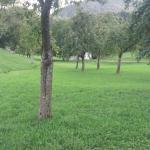 Weide mit schönem Obstgarten