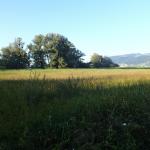 Schutzzone in Bregenz am Bodensee