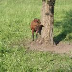 Diese Ziege ist als einzige nicht weggelaufen vor mir.