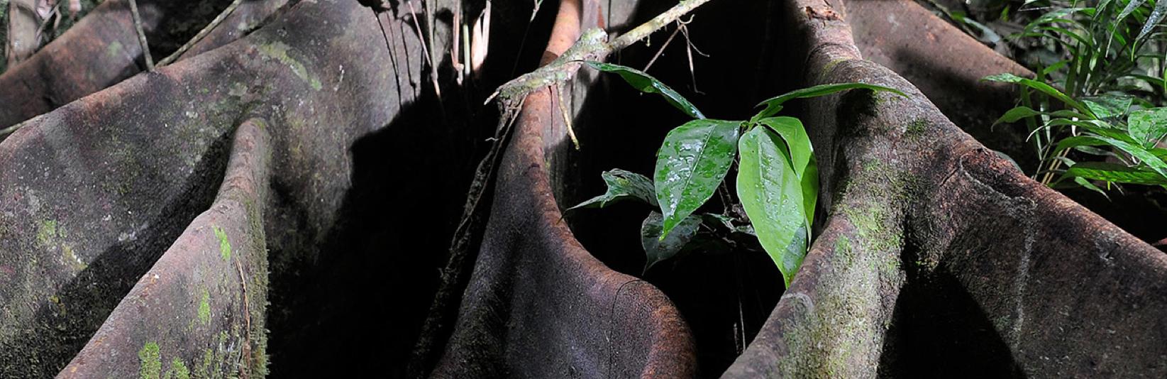 Das Geheimnis der Bäume Luc Jaquet