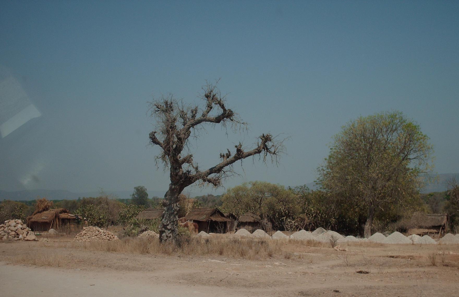 Desiderata Madagascar