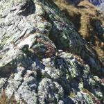Herbstfarben an der Glecksteinhütte