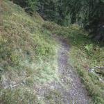 Waldfahrt für Biker