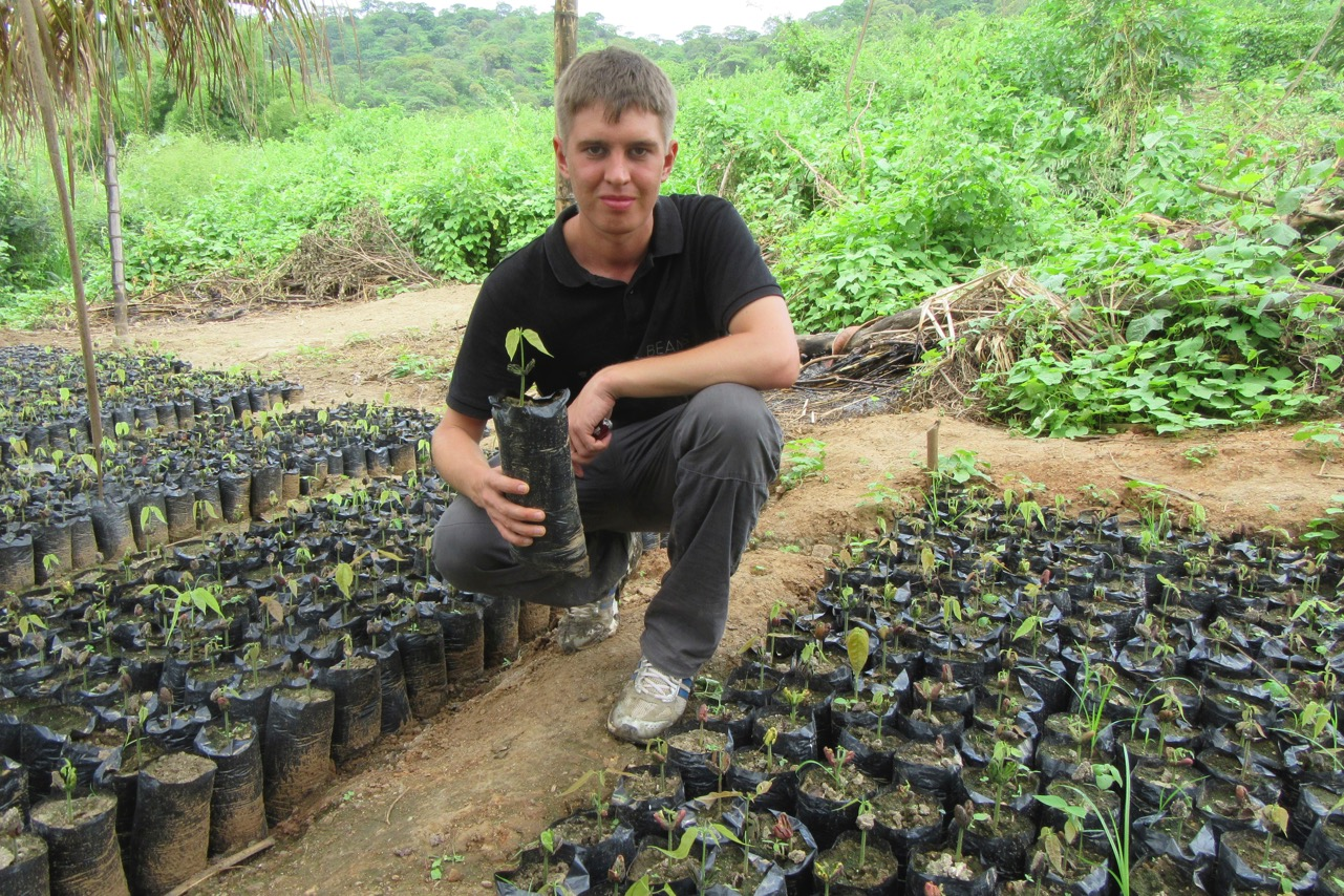 Peru Aufforstung Sprösslinge