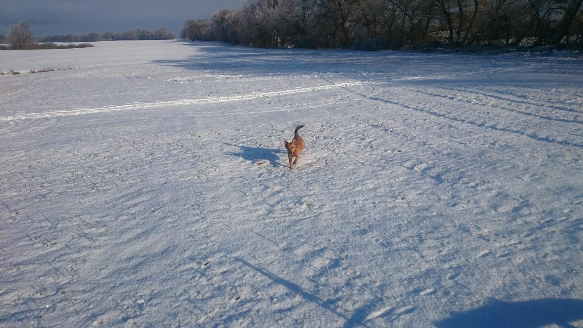 Hilarias Freude entwickeln Schnee Mecklenburg Sonne